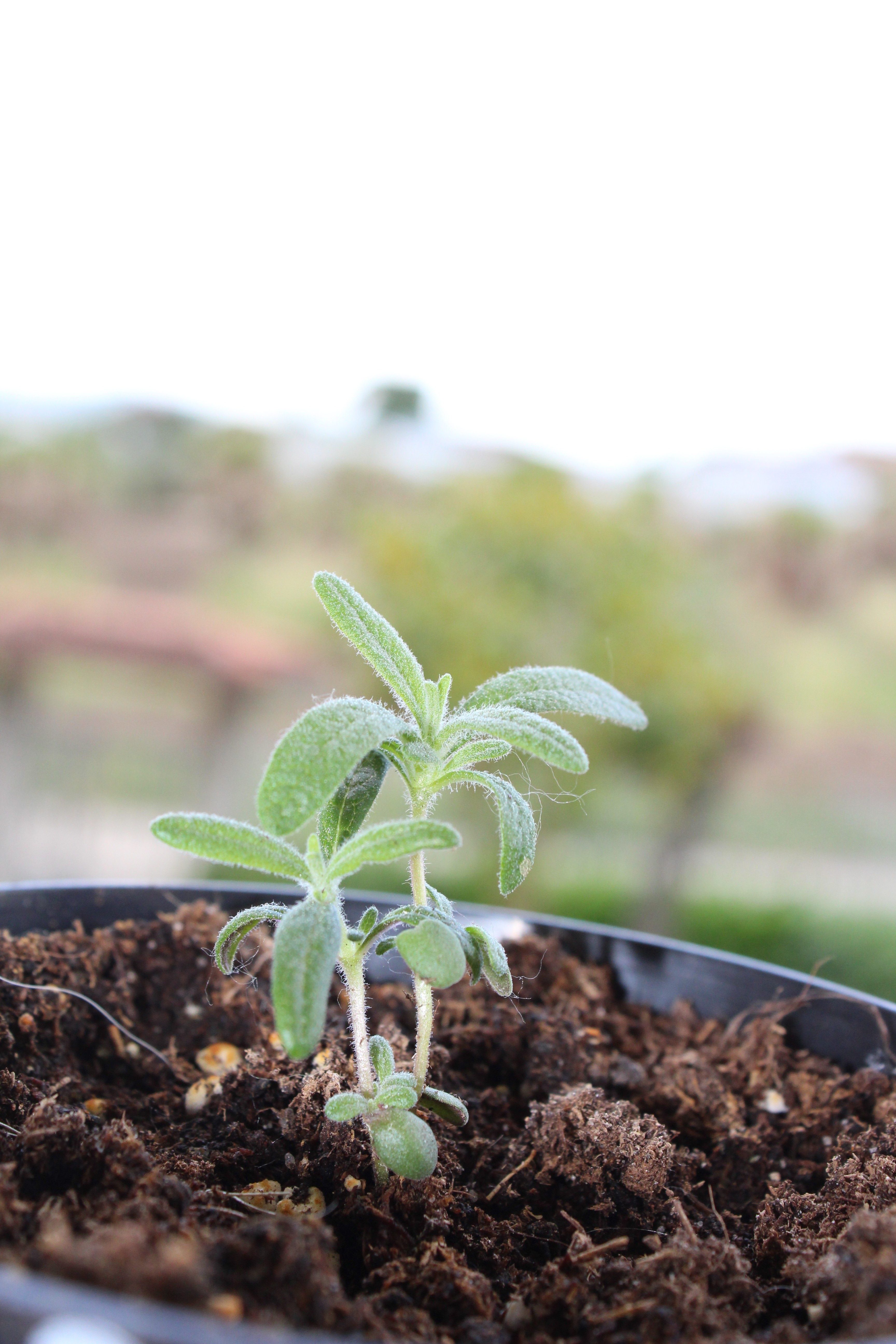 Giornata Mondiale Dell'Ambiente, In Agricoltura Occorrono Nuovi Modelli Produttivi